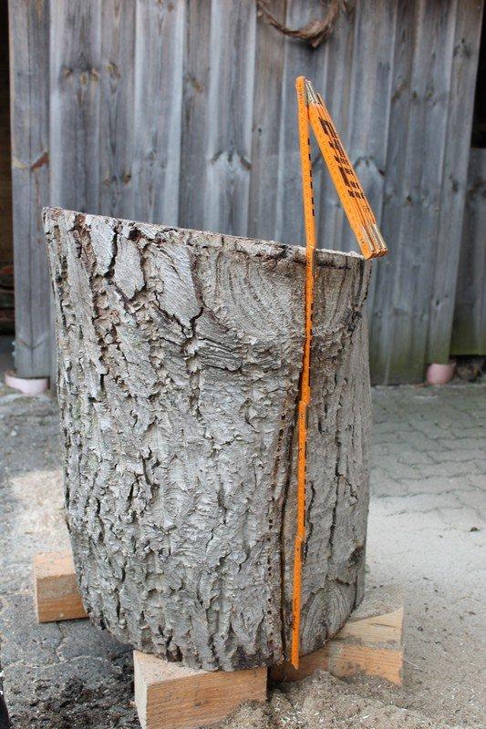 Nussbaum Stammabschnitt